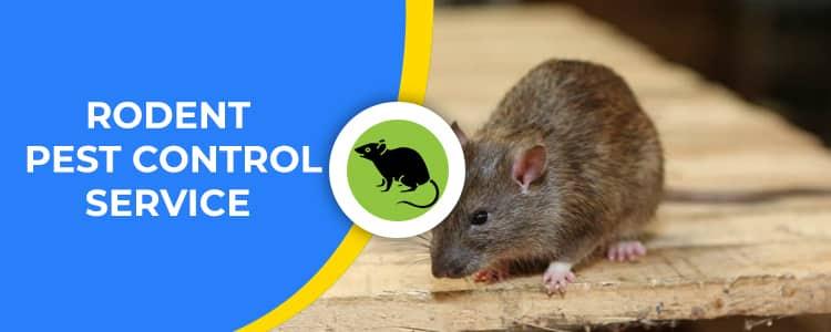 Rodent Control Wanniassa