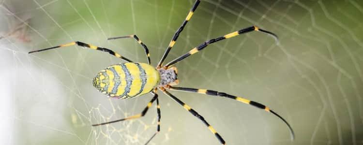 Spider Control Wanniassa